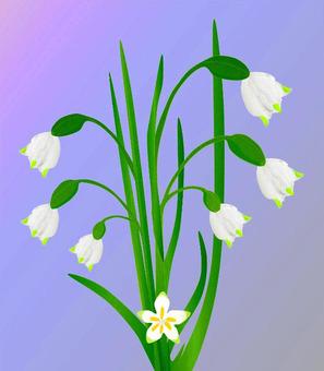 Flower (Suzuran Narcissus)