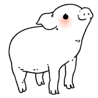 미니 돼지 씨