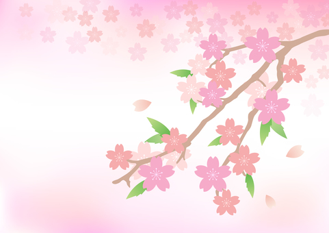 Cherry blossoms 57