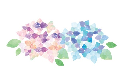 Watercolor hydrangea two colors