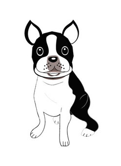 Boston Terrier nice face