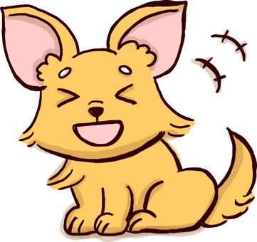 Chihuahua laugh