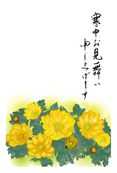 寒中見舞い(福寿草)