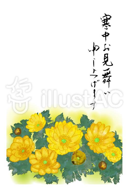 寒中見舞い(福寿草)のイラスト