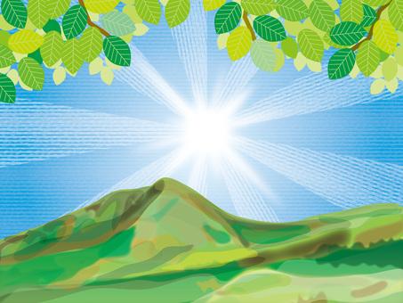 陽光和四季(15仰望新鮮的綠色和陽光A