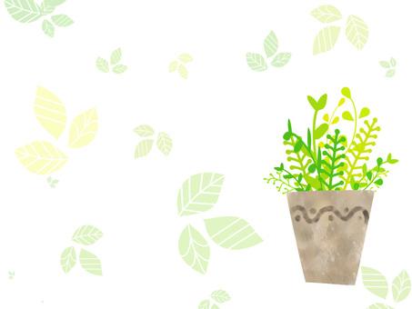 관엽 식물 프레임 ver01