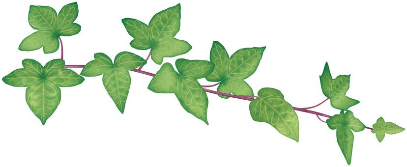 Ivy / 1