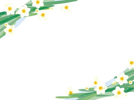 Narcissus 11