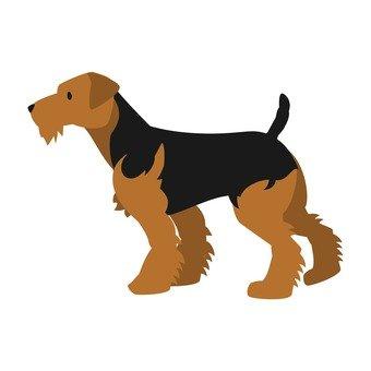Dog - Welsh Terrier