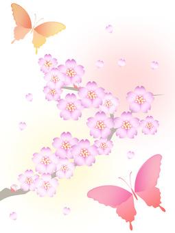 벚꽃과 나비