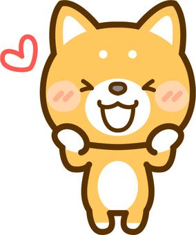 A happy Shiba Inu