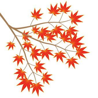 Maples (cs 2)