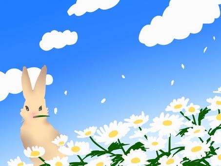 Rabbit flower blue sky