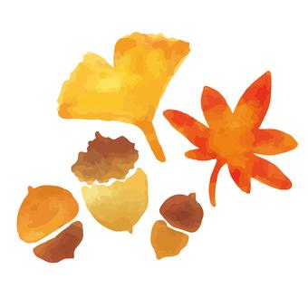 秋葉銀杏橡子