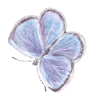 蝴蝶5大和Shizimi