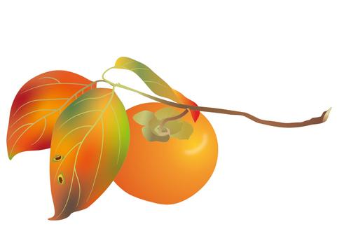 나뭇 가지에 붙은 감의 열매