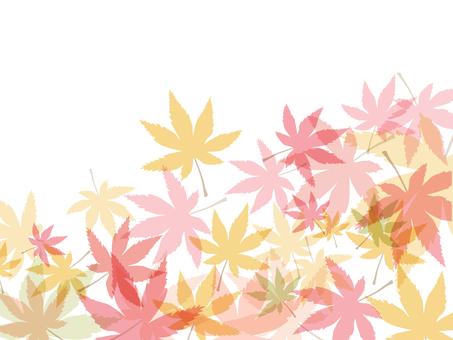 Autumn leaves 椛 Material 16101601