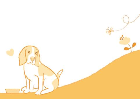 dog_ Beagle dog 19