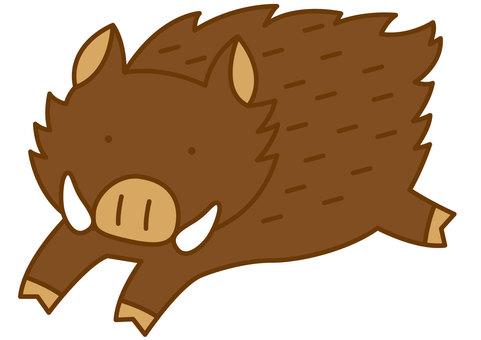 Wild boar 1-4c
