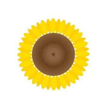 Sunflower ①