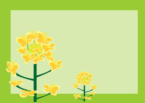 菜の花の季節 A4