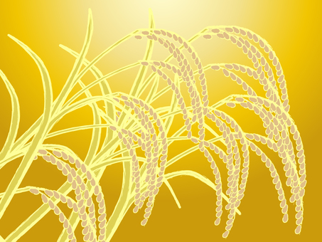 Japanese-style material Autumn Background Rice background