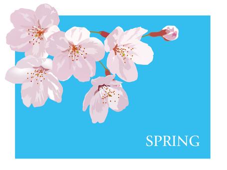 Bahar, kiraz çiçeği, çiçek, yaprak, yer deseni