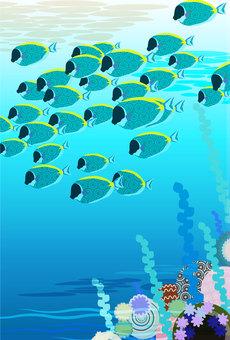 생선 컬렉션 7