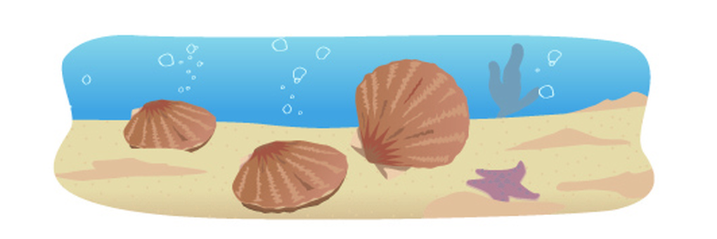 Undersea scallop