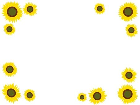 Fringing of sunflower