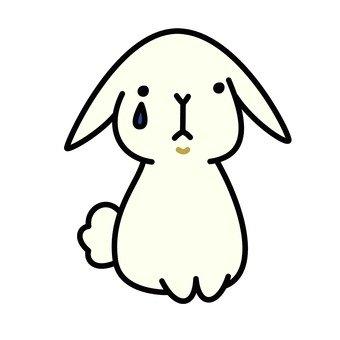 Saddening rabbit
