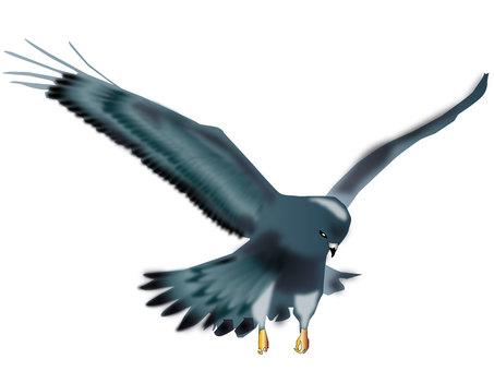 독수리 07