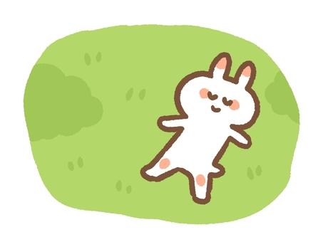 Rabbit lying on the grass