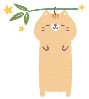 스트립 고양이