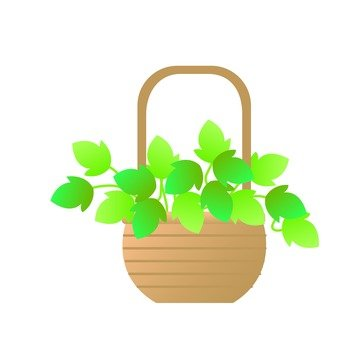Houseplant - Ivy (basket)