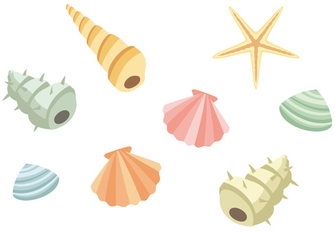 Seashell of rough touch