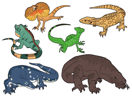 6 types of large lizards