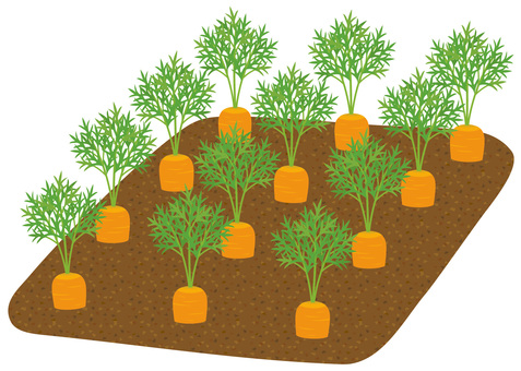 Simple carrot field