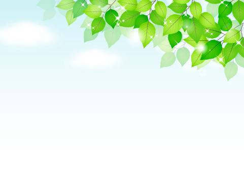 Fresh green material 239