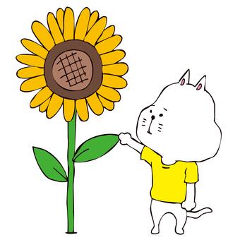 向日葵和貓