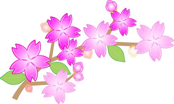 벚꽃 가지와 꽃 봉오리와 잎 첨부