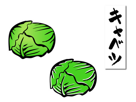 Hand-drawn cabbage