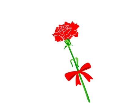Carnation 5 one wheel