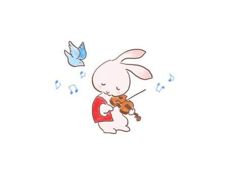 バイオリンウサギ27