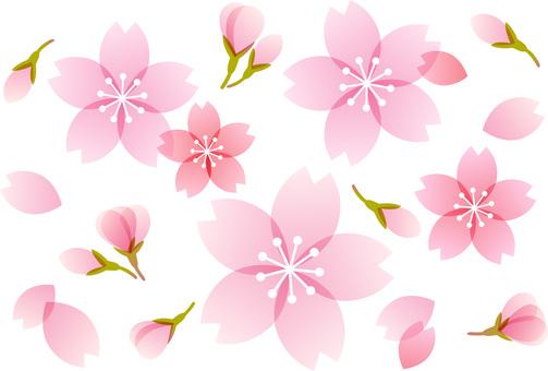 200201.Cherry blossom 11