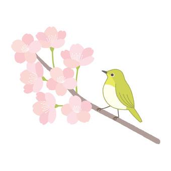 벚꽃과 동박새