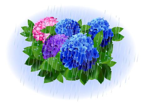 Hydrangea on a rainy day