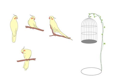 Cockatiel and bird cage