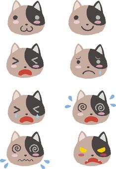Cats summary