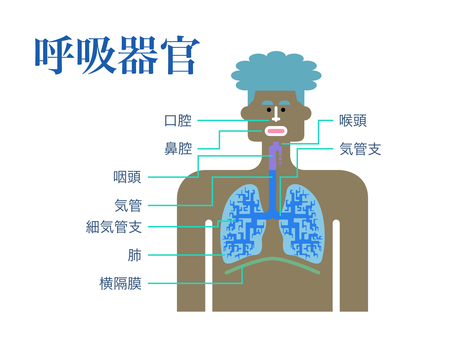 Simple diagram of respiratory organs with Japanese names